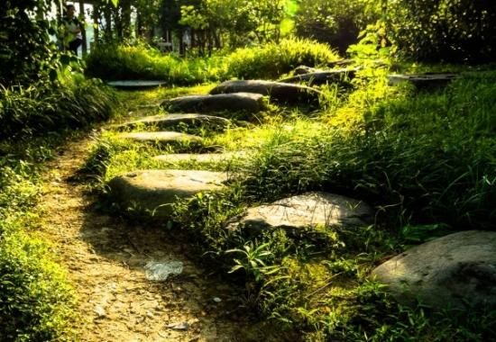 """Consultation """"Votre Chemin de Vie"""""""